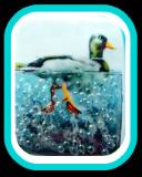 DUCK Swimming in CORALENE Glass Beads - Fused Glass Button Scene