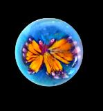 Diminutive BUTTERFLY Glass Paperweight Button