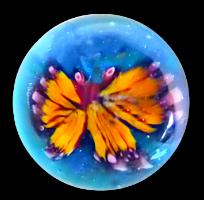 Dimi Butterfly web 200