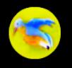 Gallery Dimi Blue Bird