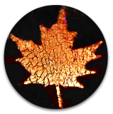 Maple Leaf 14k Gold Decal on Black Glass PW Button