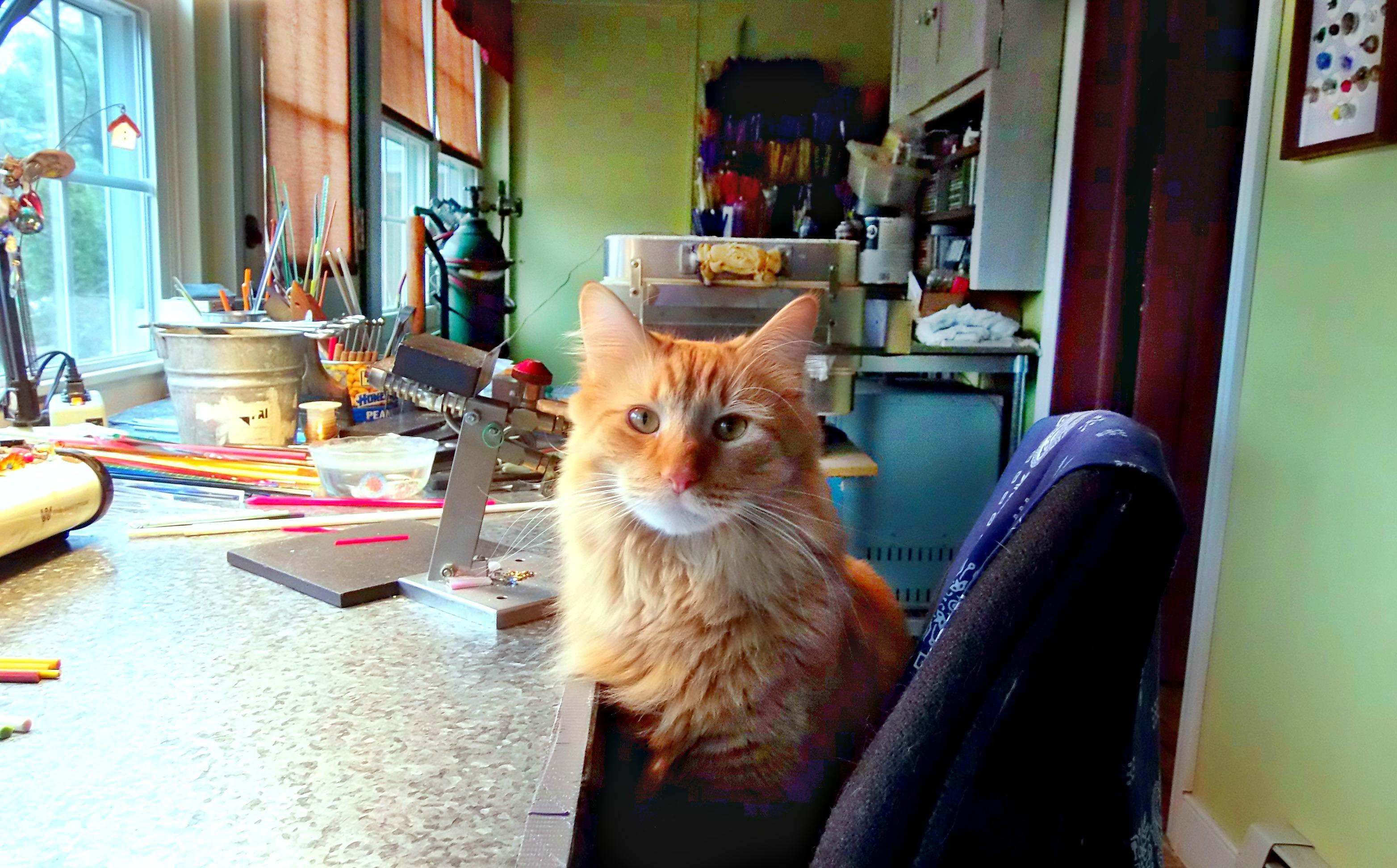 Sunny in the Studio
