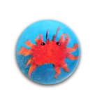 Diminutive CRAB Paperweight Button Blue or Black Glass Base